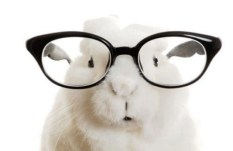 Top-10-Images-of-Animals-Wearing-Glasses-10